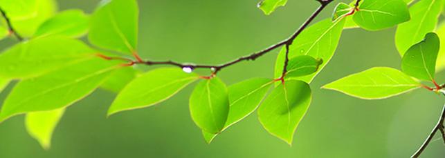 homeopathie en ouderen