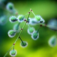 chronische klachten en homeopathie gonnie ente