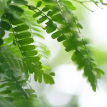 overgang baarmoeder en homeopathie gonnie ente